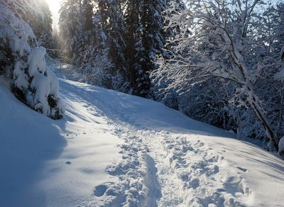 Snowshoeing : walk through the snowy mountain pastures